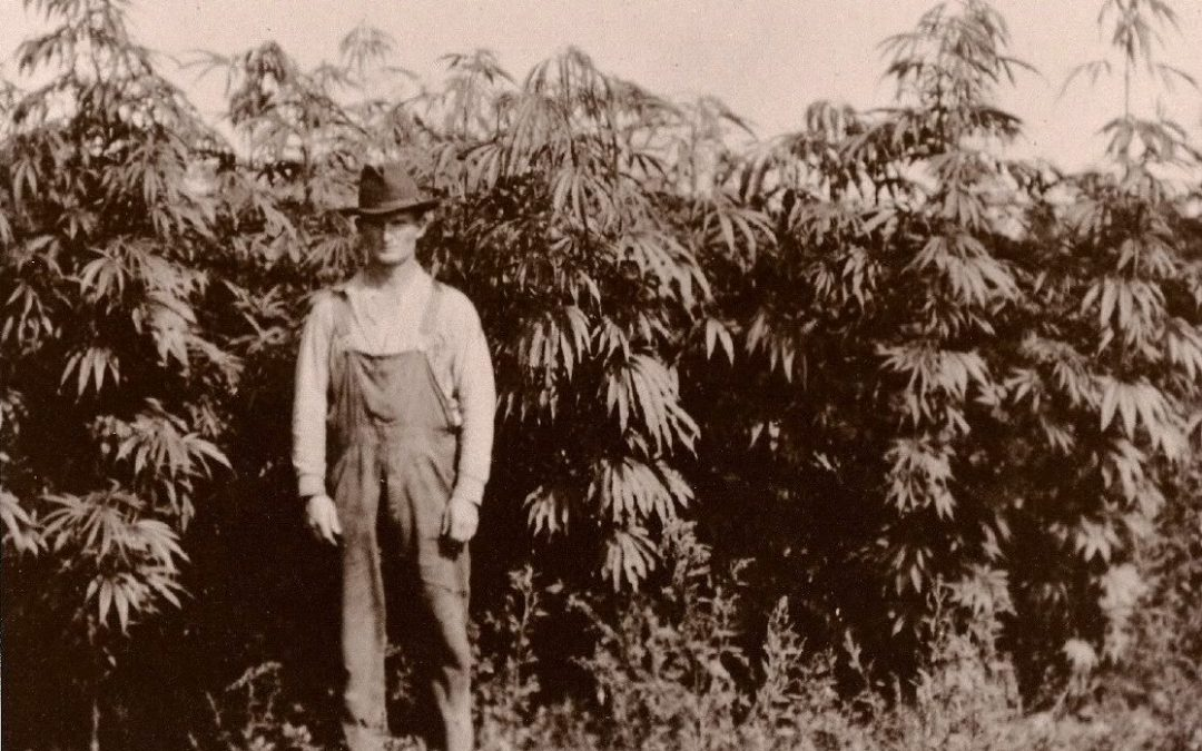 Of Hemp and Ancient Human