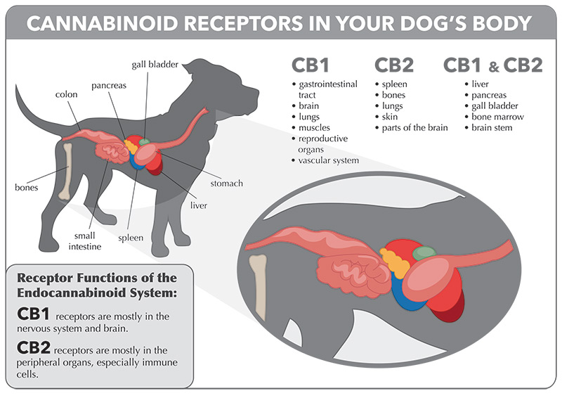 CBD Treatment for Pets